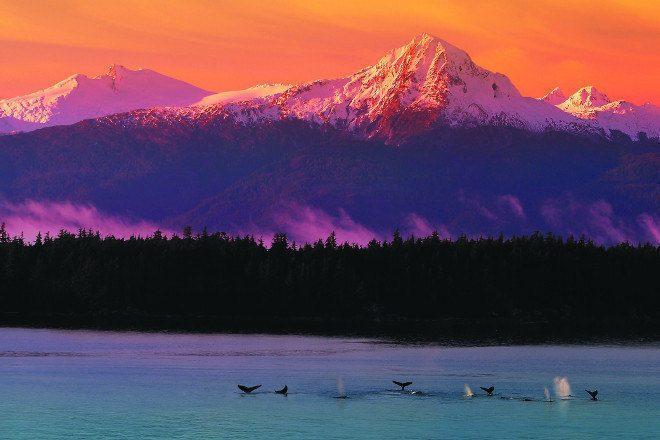 Cores, Vida e Sabores Das Baixas Temperaturas Do Canadá e Alasca