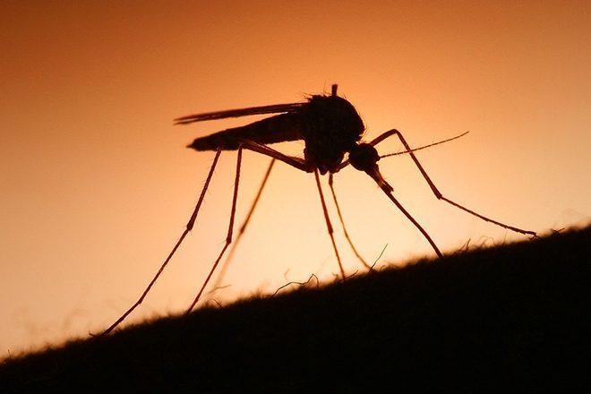 Pesquisa indica que som de Skrillex pode repelir mosquitos