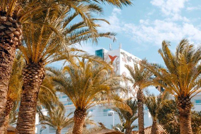 Brasileiro tem faixa selecionada para campanha de reabertura do prestigiado Ushuaia Ibiza